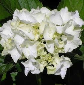 10637_flower.jpg