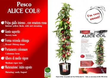 frutto-alice-coll-001-small.jpg
