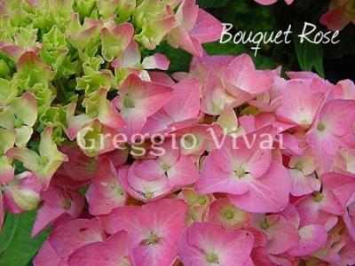 hydrangea_macrophylla_bouquet_rose.jpg